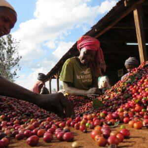 koffiereis naar Kenia